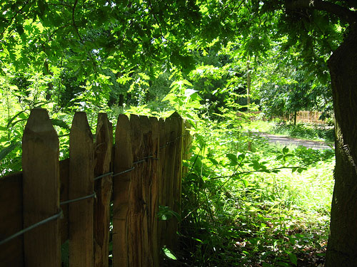 A fence, and a pathway leading away through trees
